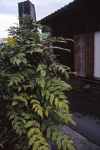 20140609_noririn.jpg