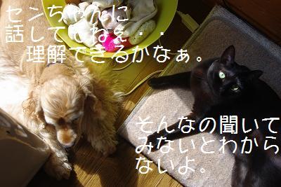 s-new5.jpg
