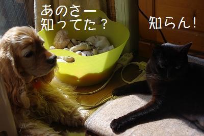 s-no1.jpg
