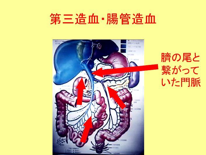 消化器造血
