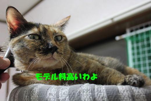 IMG_5729.jpg