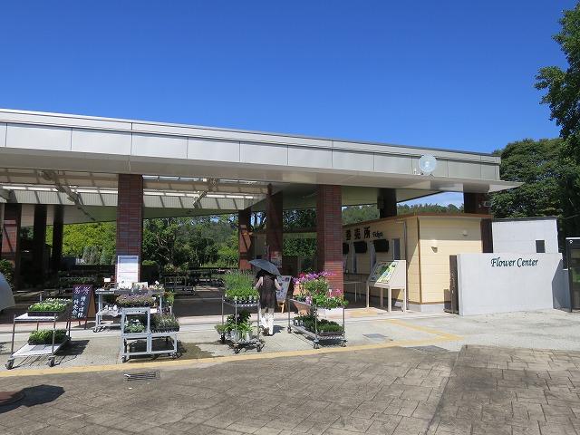 兵庫県立フラワーセンター(加西市) (1)
