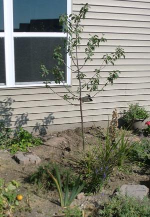 garden10031405.jpg
