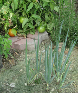 garden10031407.jpg