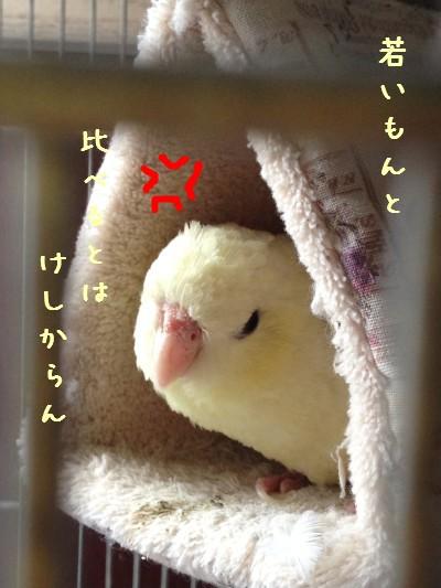 IMG_4986 - コピー - コピー