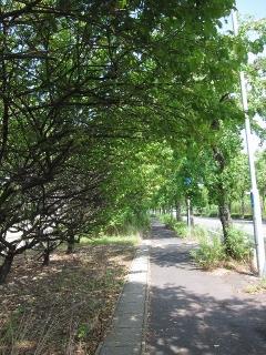 愛知県道50号名古屋碧南線