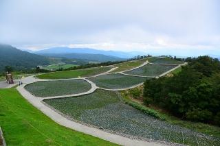 天空の花回廊「芝桜の丘」