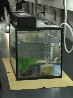 大学共同利用機関法人 自然科学研究機構 生理学研究所 一般公開