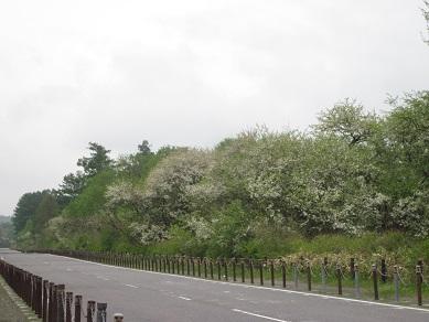 相生滝 004