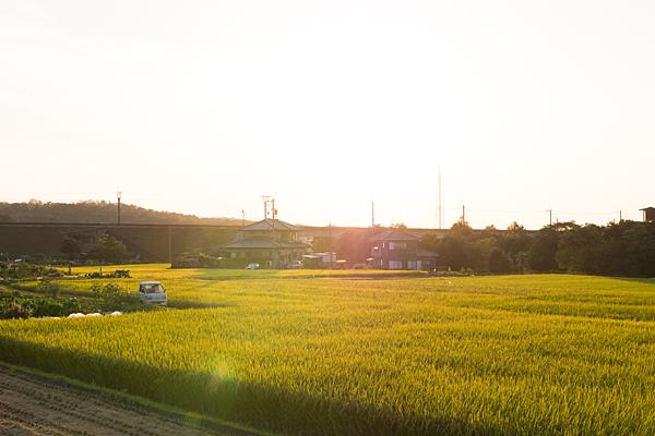夕方写真-2