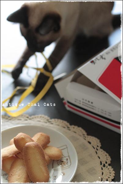 猫 cat แมว ไทย アンティークタイキャットAntique Thai Cats シャム猫 Siamese