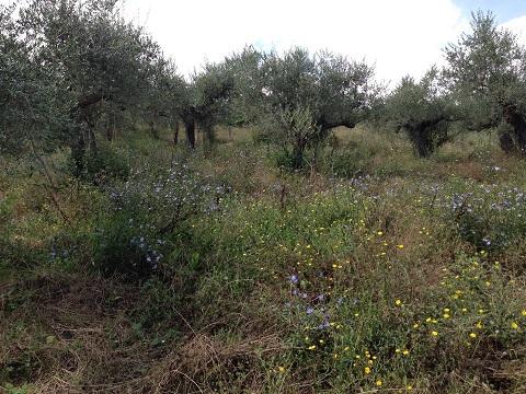 アサクラ農園(1)
