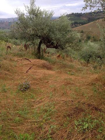 アサクラ農園(3)