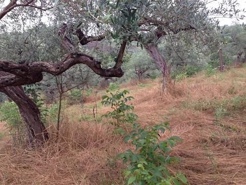 アサクラ農園(4)
