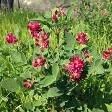 春の赤い花