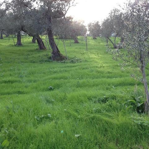 2014アサクラ農園の様子