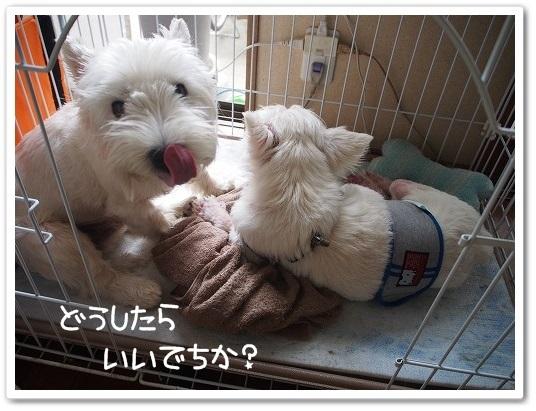 りゅん&エース