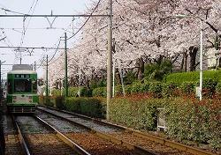 s-桜と都電.jpg