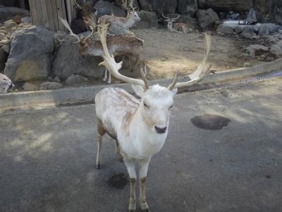 動物園 (4)