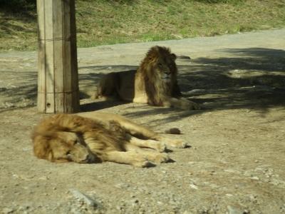 動物園 (5)