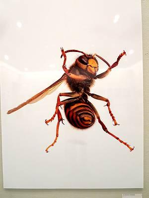 海野和男氏の昆虫写真