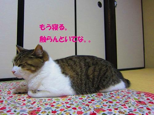 はなの災難13