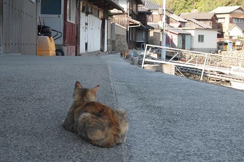 猫島47 (2)