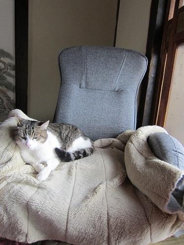 座椅子はな1