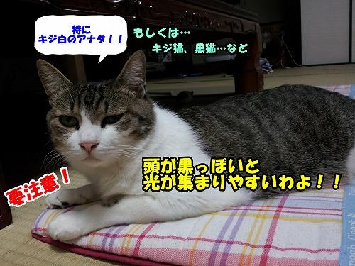 20140728_200951.jpg