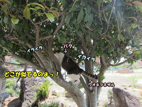 IMG_3485.jpg