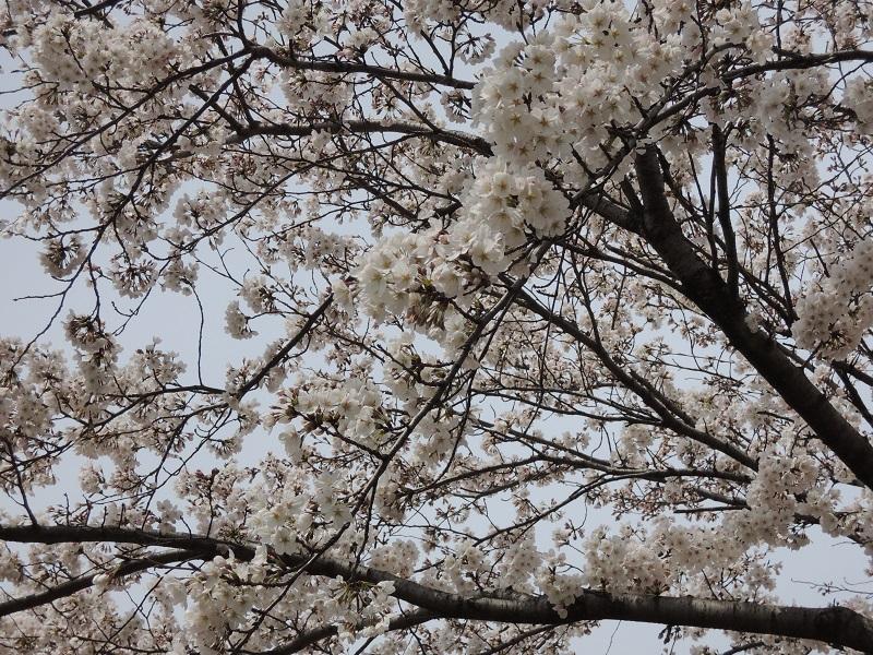 2014-04-01(2).jpg