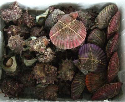 サザエと緋扇貝