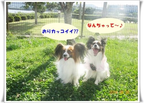 DSC00465_20141004223147f5b.jpg