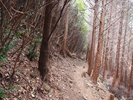 5二ノ岳登山道山頂付近