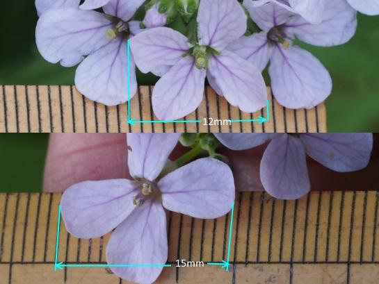 34花サイズ