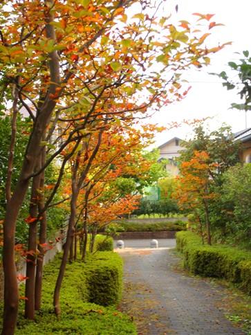 my-garden 036 (4)