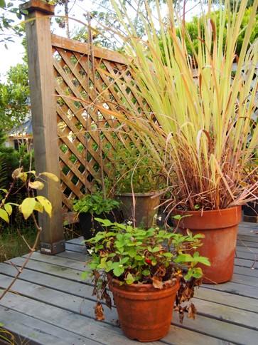 my-garden 030 (2)