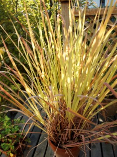 my-garden 084