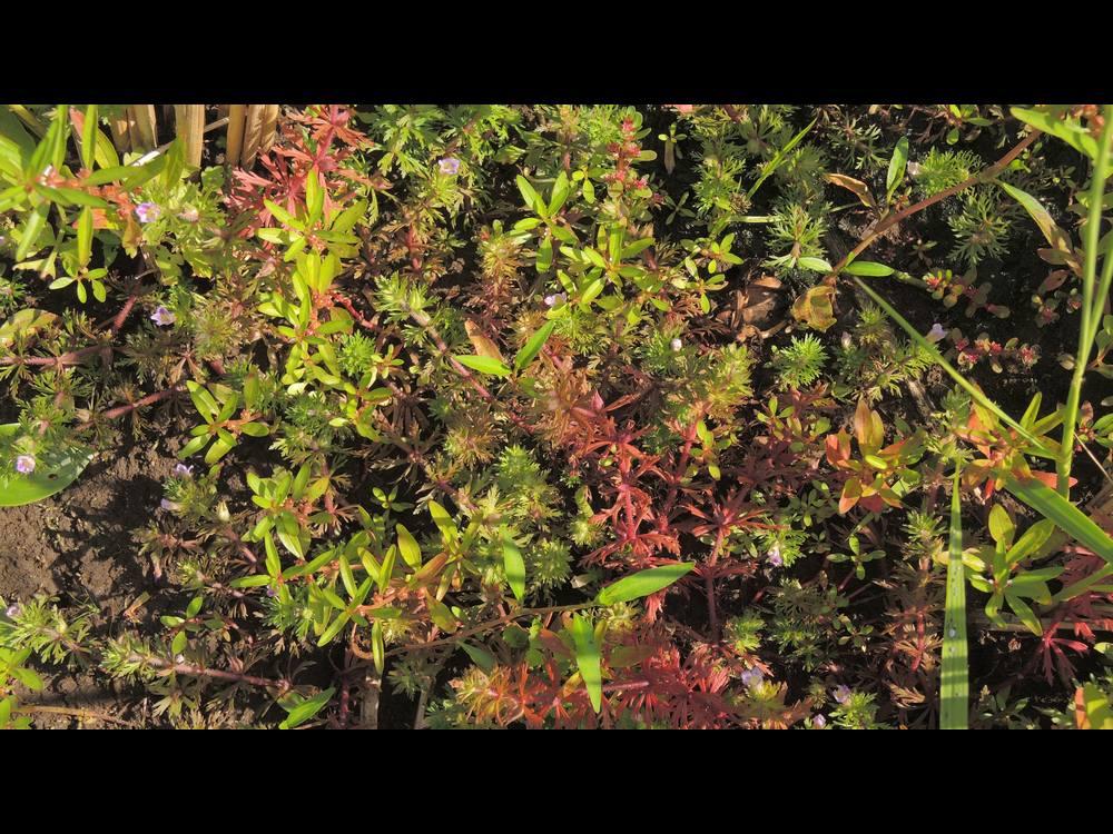 キクモ 全景の様子紅葉
