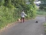 20140929散歩 (3)-1