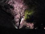 1403-yozakura5.jpg