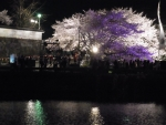 1403-yozakura.jpg