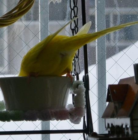 在る昼下がり二羽の食事3