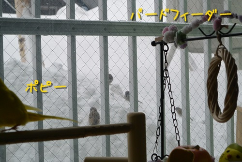 すごい雪1