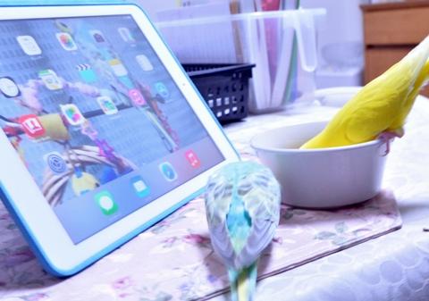 iPadでもボクラを撮ってよ
