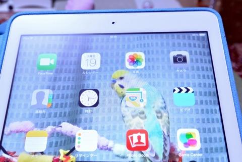 iPadのiconがディジーに1
