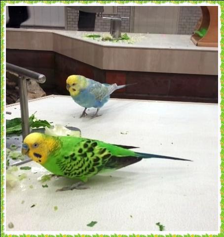 小鳥の広場2