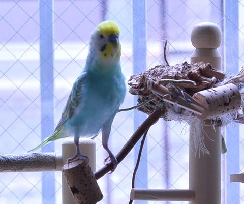 あ、あの鳥は