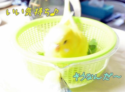 ミント入浴1