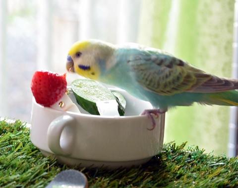 ディジーイチゴうまし!1